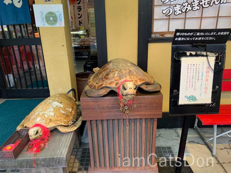 漁師寿し 網元 武田丸 ウミガメ